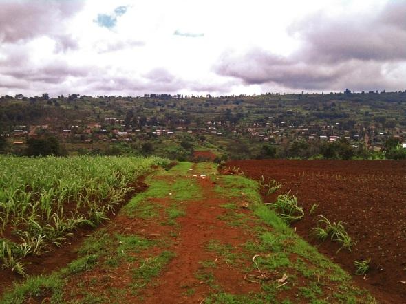 Farmland in my village, Rwanda