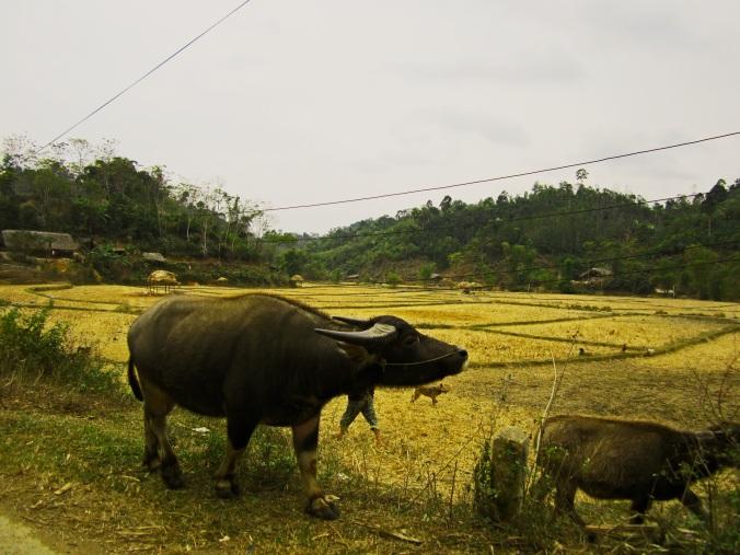 Farmland in the north