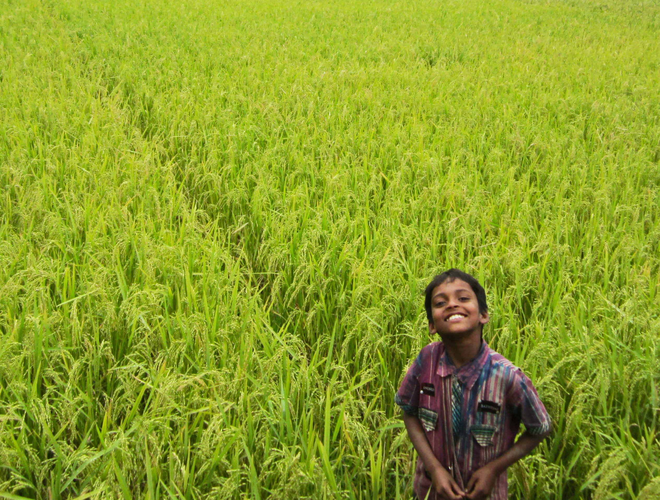 agriculture of bangladesh