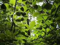 Torquay Woodland