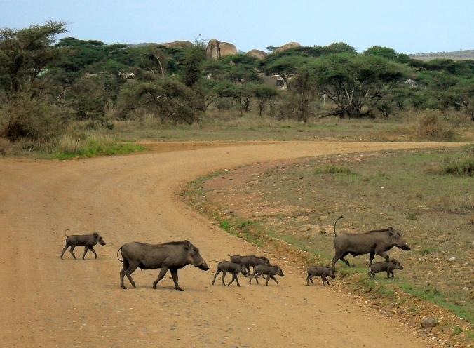 Tanzania and Zanzibar 2010 182