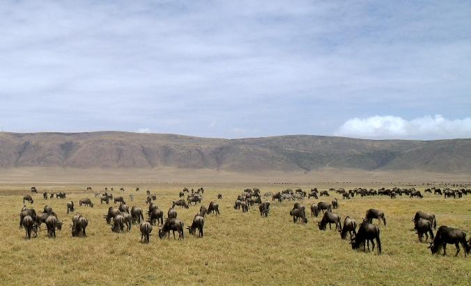 Tanzania and Zanzibar 2010 262